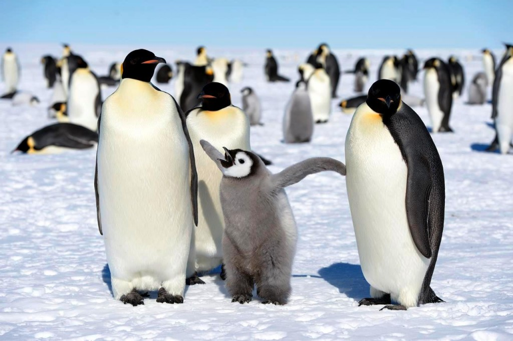 pingvin mentor