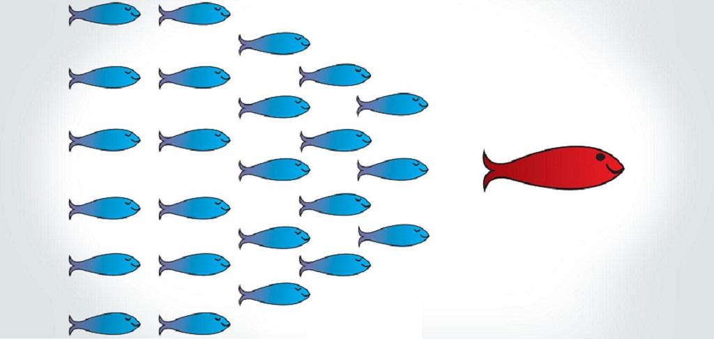 vezető - halak
